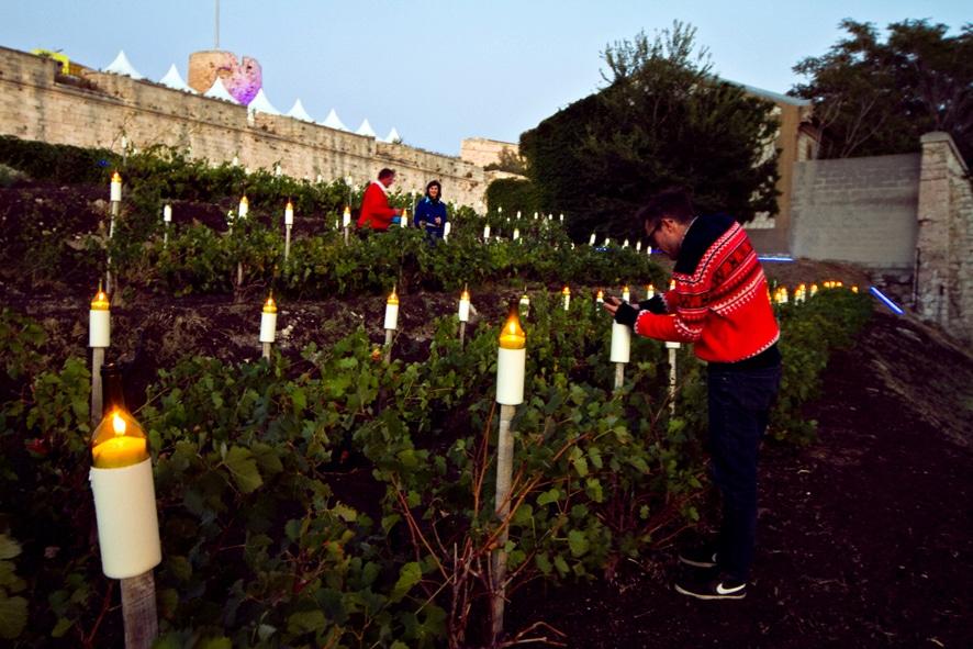 vignes, Insolite – Des vignes bien cachées dans le centre-ville de Marseille, Made in Marseille