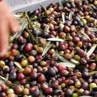 Les olives d'Aix © Office de Tourisme d'Aix