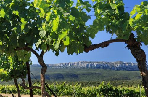 vigne-domaine-viticole-champs-nans