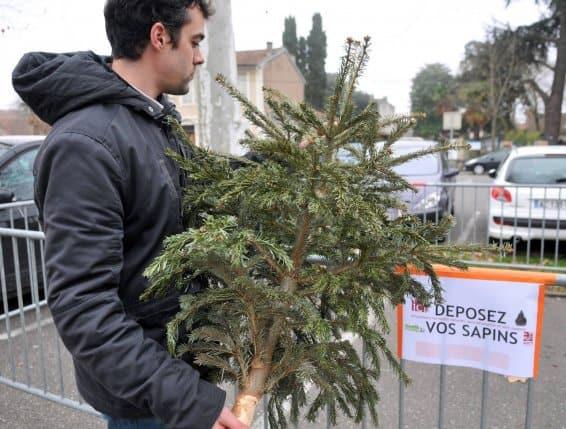 sapins, Que deviennent nos sapins de Noël une fois recyclés?, Made in Marseille