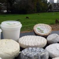 Des fromages 100% marseillais produits dans les quartiers Nord