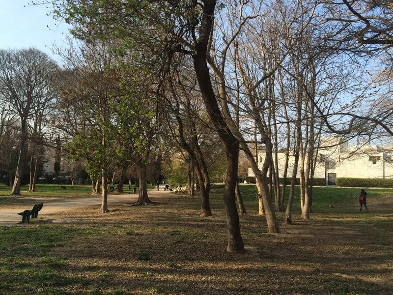 abre-jardin-ombre-calme-nature