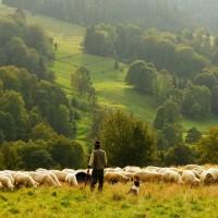 Comment la région veut relancer l'agriculture en Provence