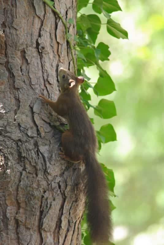 ecureuil-animal-jardin-centre-marseille