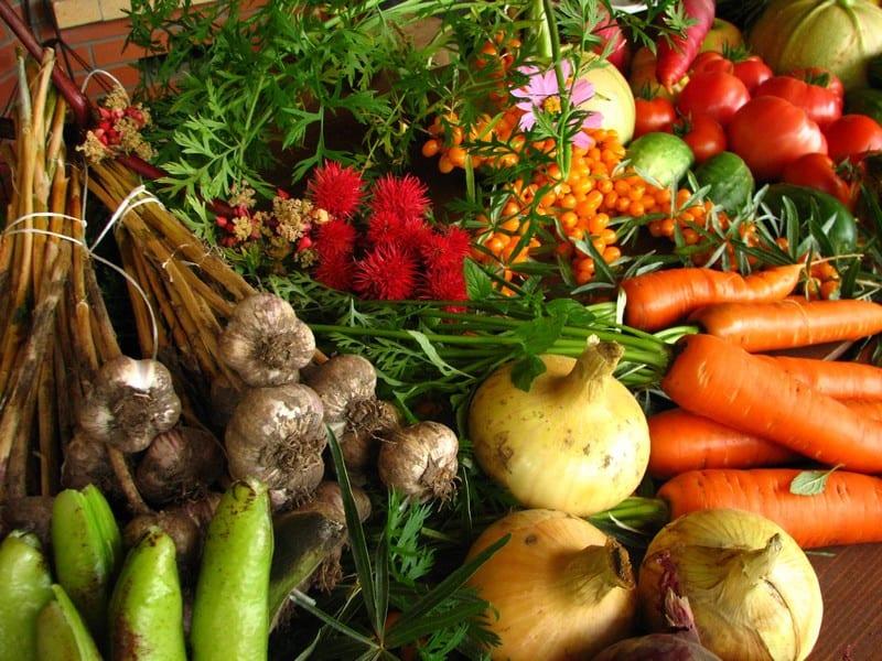 fruit-legume-bio-marche
