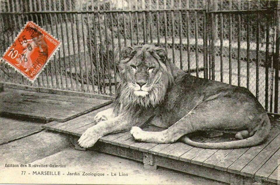 jardin zoologique, Des animaux en plein cœur de Marseille: l'époque du jardin zoologique, Made in Marseille, Made in Marseille