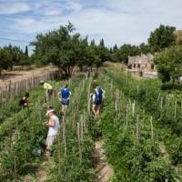 Des terres redevenues agricoles au nord de Marseille