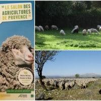 Le 1er salon de l'agriculture Made in Provence débarque en juin 2016