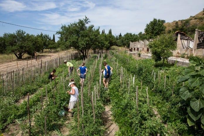 terre-agricole-culture-maraichere
