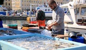 Balade sur le marché aux poissons du Vieux-Port