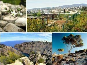Marseille en 3e position des villes les plus exemplaires en matière de préservation de la biodiversité