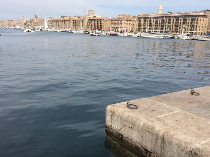 Sard invaders quand les sardines envahissent marseille made in marseille - Sardine port de marseille ...