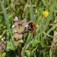 abeille-developpement-biodiversite-nature
