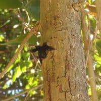 abeille-nid-arbre-bois