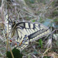 etude-recherche-insecte-papillon