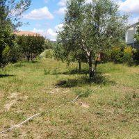 hotel-insecte-arbre-espace-vert