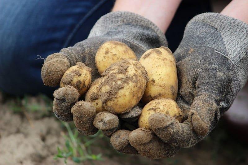legume-produit-bio-agriculture-locale