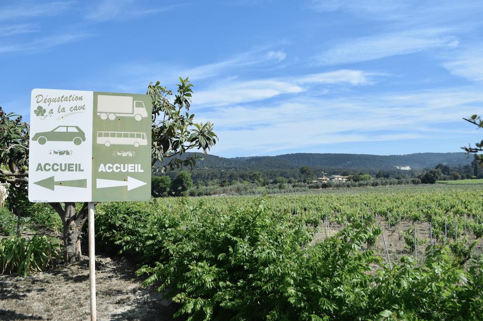 vins-cassis-domaine-vignes