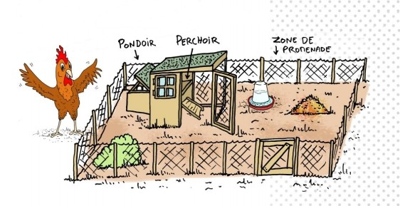 a f lix pyat des marseillais adoptent des poules pour r duire les d chets made in marseille. Black Bedroom Furniture Sets. Home Design Ideas