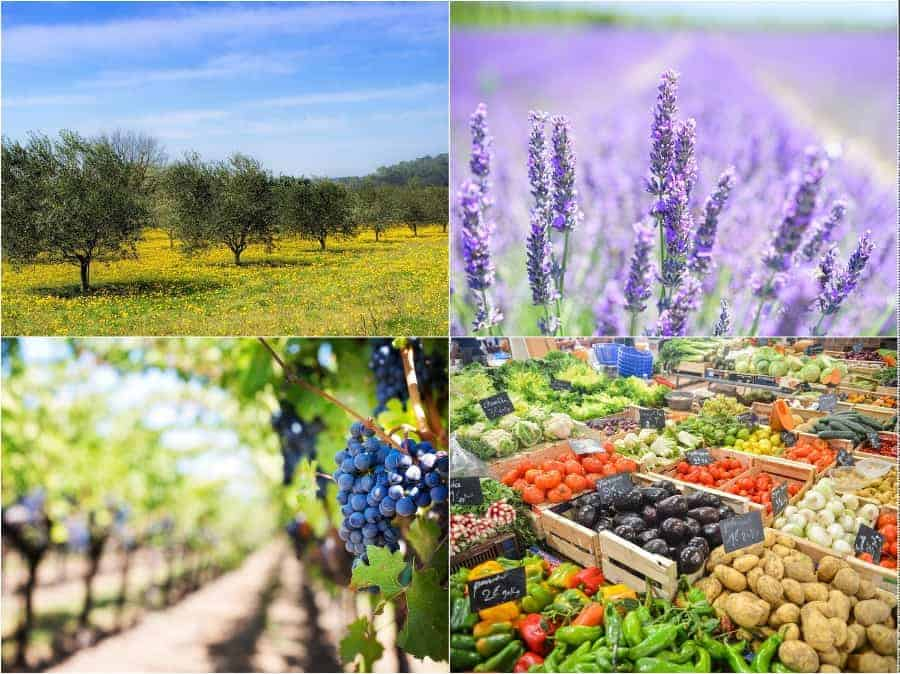 agriculture-producteur-provence