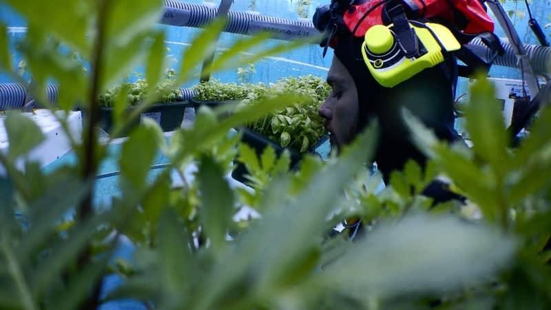 , Jardin de Némo – Des potagers écologiques qui poussent dans la mer