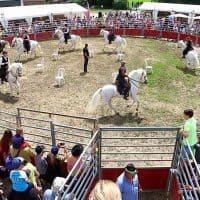 Des démonstrations de chevaux