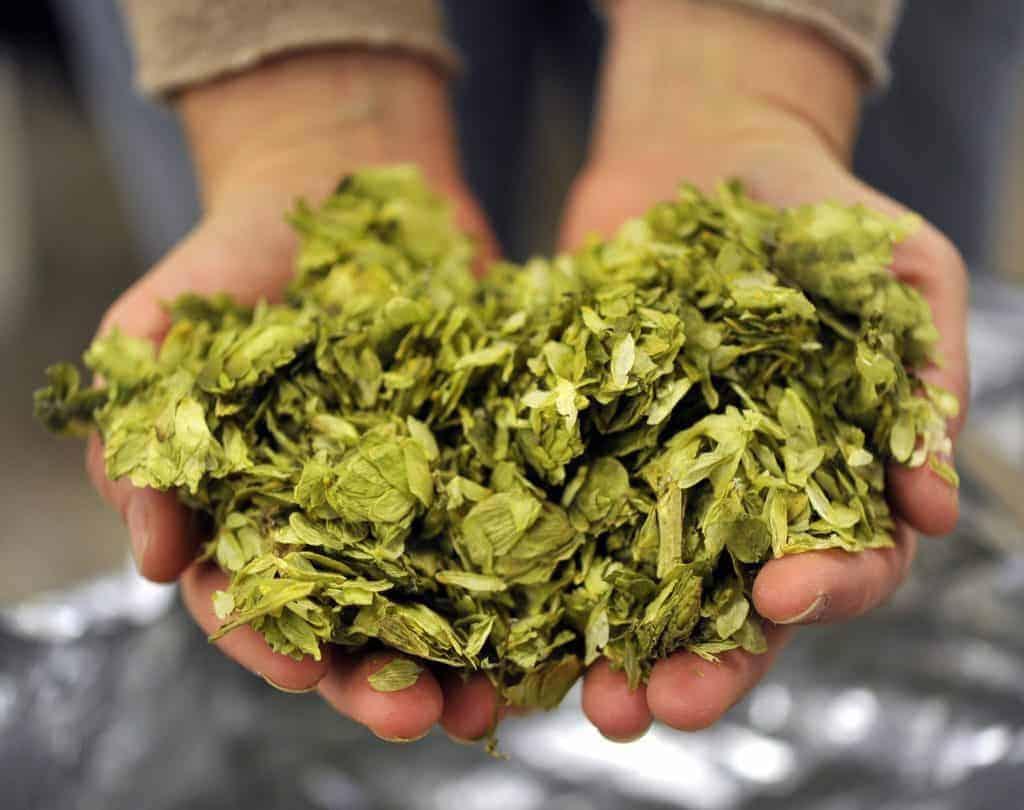 , Insolite – Du houblon bio cultivé à Marseille pour de la bière 100% locale !