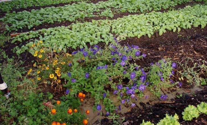 croq-jardin-roque-antheron