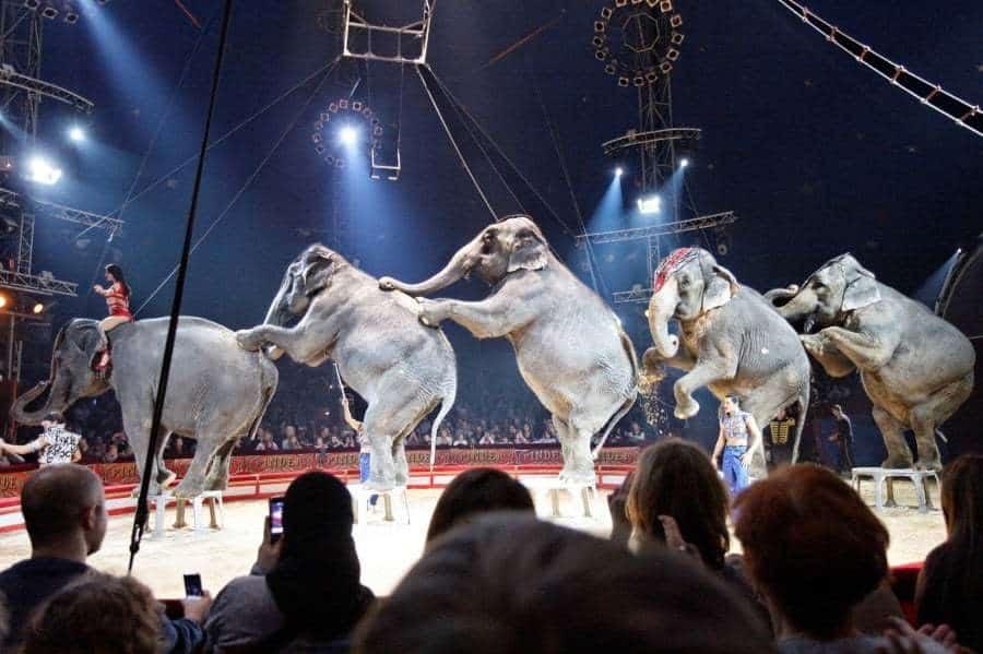 , Débat – Faut-il interdire les animaux dans les cirques et les parcs ?, Made in Marseille, Made in Marseille