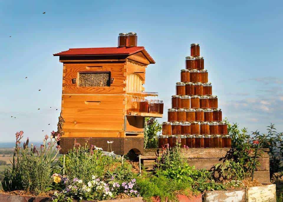 flow hive les ruches intelligentes pour r colter le miel sans g ner les abeilles made in. Black Bedroom Furniture Sets. Home Design Ideas