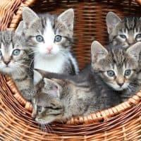 , Défilé de chatons au café des chats