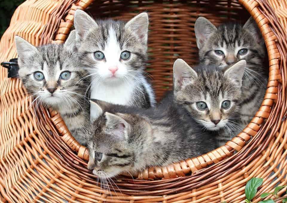 , Le Coin des Chat'mis – Le premier bar à chats de Marseille en vidéo !