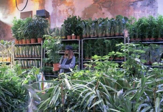 une grande vente de plantes prix r duits ce week end