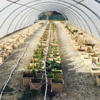 , Une Cité dédiée à l'agriculture urbaine va ouvrir ses portes à Marseille