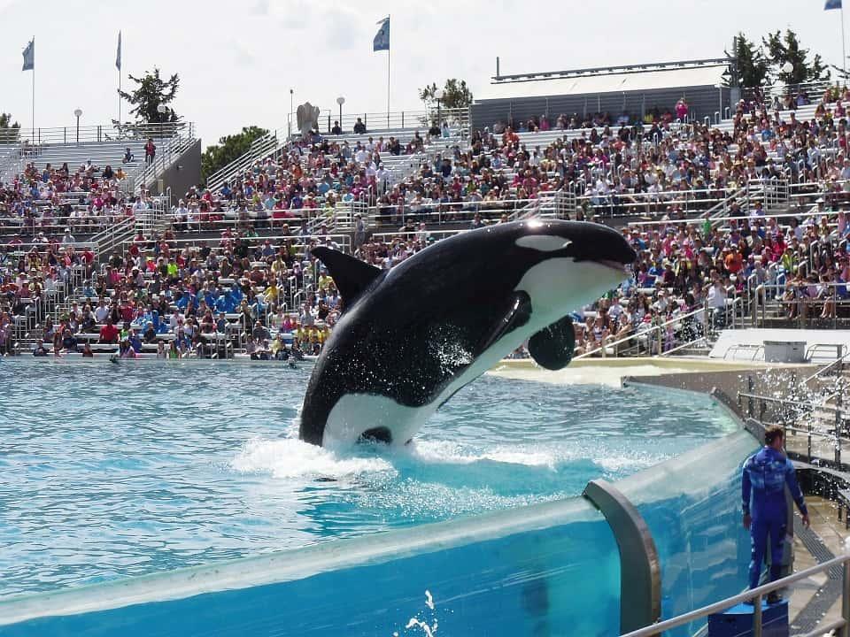 , La captivité des animaux des parcs comme Marineland à Antibes en débat