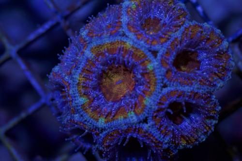 , Un chercheur marseillais en passe de guérir le cancer à l'aide des coraux ?