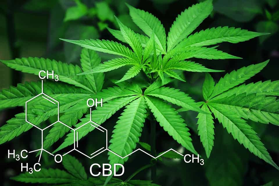 Marseille - Le cannabis à usage thérapeutique en test à l'hôpital la Timone
