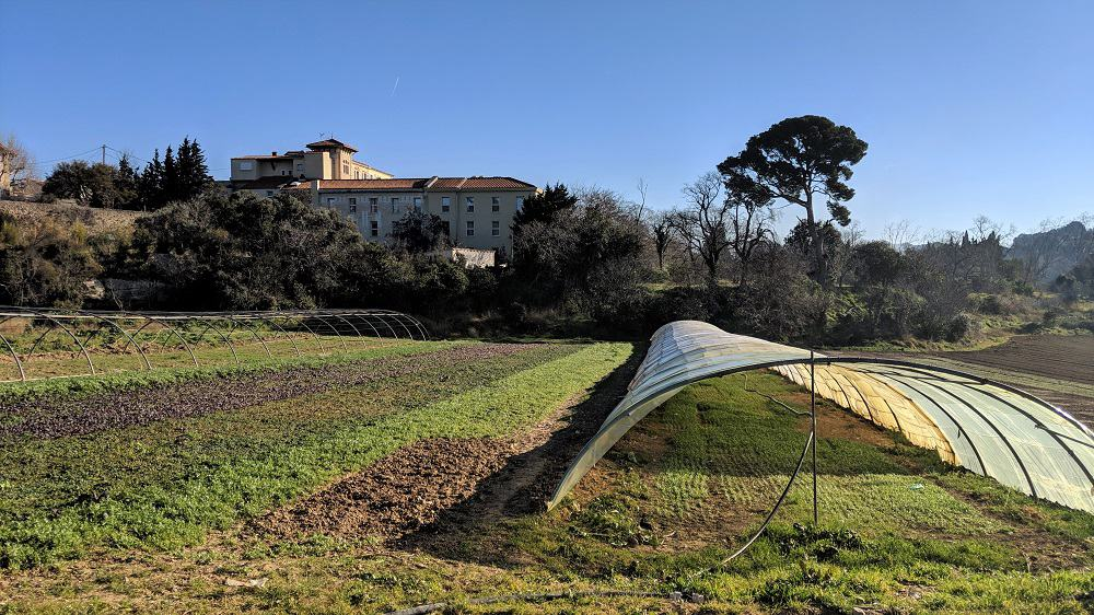 , À la ferme Garnerone dans les quartiers nord, la salade est une affaire de famille, Made in Marseille, Made in Marseille