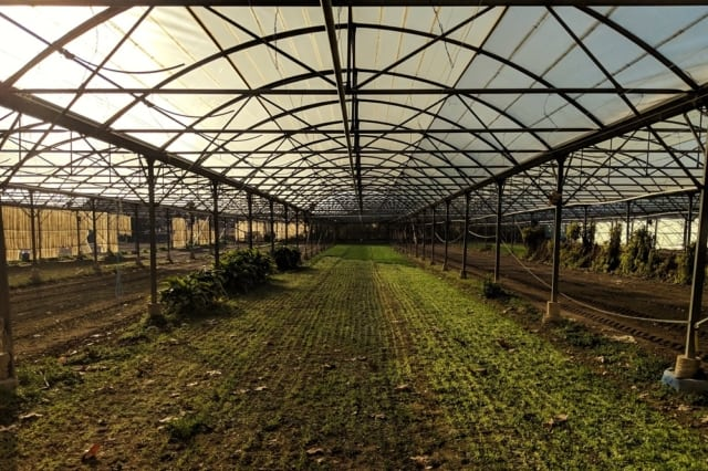 , À la ferme Garnerone dans les quartiers nord, la salade est une affaire de famille