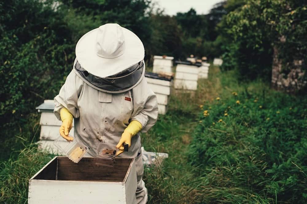 , 400 000 € pour développer la filière apicole dans la région