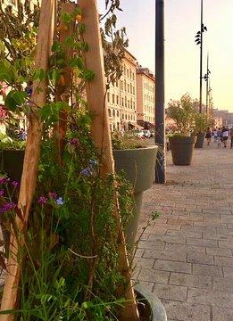, L'image du jour : des plantes en pots débarquent sur le Vieux-Port