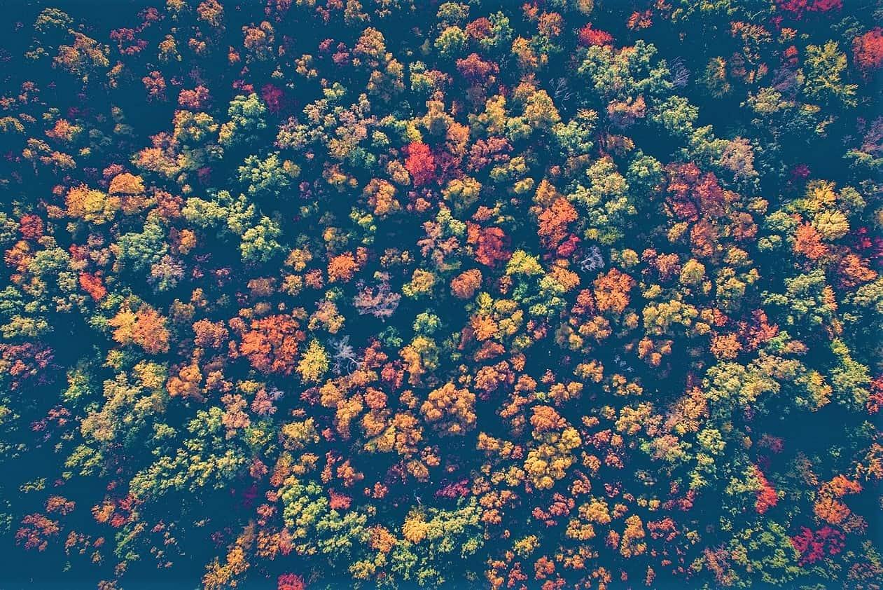 , Un million d'arbres plantés d'ici deux ans en Provence-Alpes-Côte d'Azur, Made in Marseille, Made in Marseille