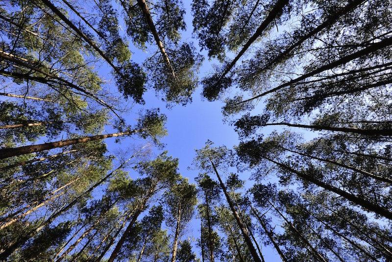 , Plan un million d'arbres de la région Sud : déjà 800 000 promesses de plantation, Made in Marseille, Made in Marseille