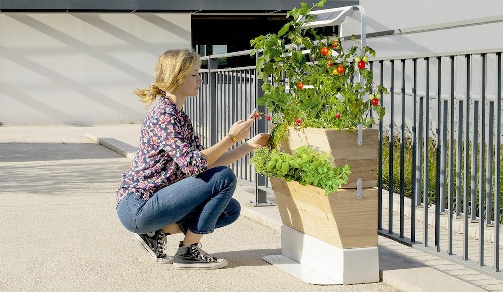 , Agrove, l'application pour vous aider à cultiver votre potager en ville, Made in Marseille, Made in Marseille