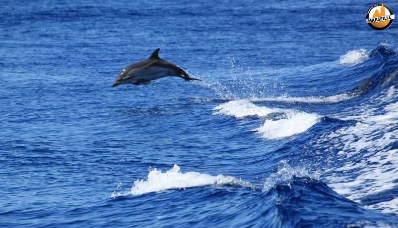 Très Découvrez des dauphins et baleines tout près de Marseille ! | Made  IB29