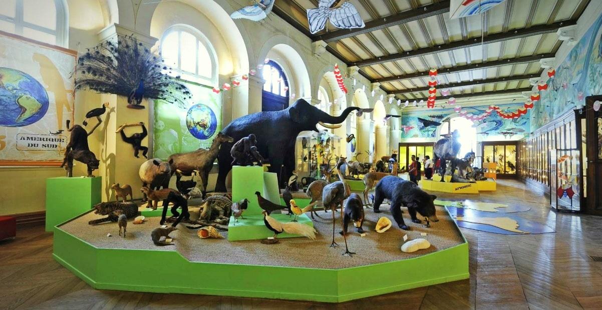 museum-histoire-animaux-safari-longchamp