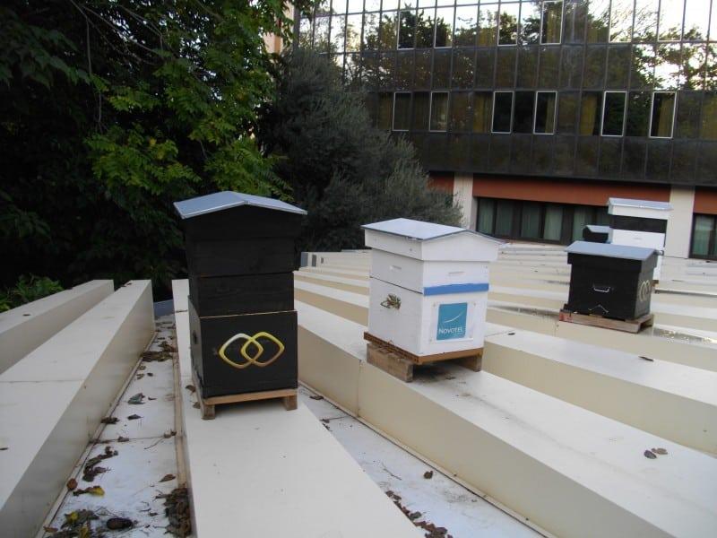 ruches, Insolite – Des ruches sur le toit des grands hôtels pour la survie des abeilles, Made in Marseille, Made in Marseille