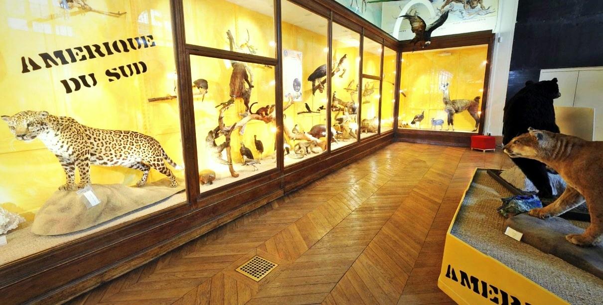 visite-museum-histoire-naturelle-lonchamp